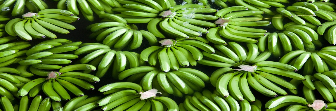 indian banana exporter from india